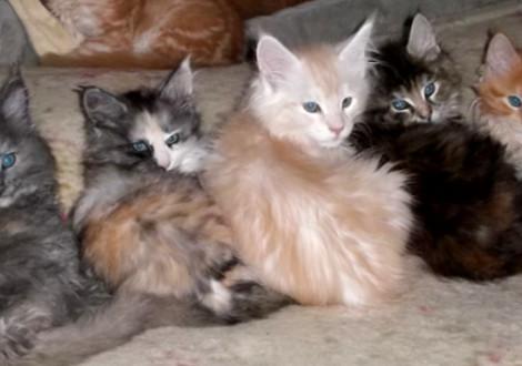 gatti-colorati