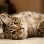 6 curiosità sui gatti: forse non sapevi che…