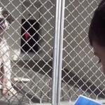Il bimbo autistico che legge favole ai cani
