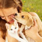 Chi preferisce i gatti è un tipo più solitario… [ricerca]