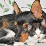 Storia di due cani che amano i gatti…