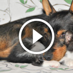 VIDEO: cane e gatto, coccole e giochi