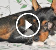 cane e gatto video