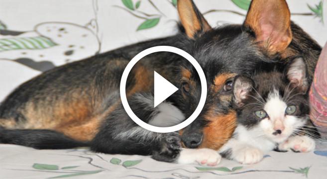 VIDEO: cane e gatto, coccole e giochi