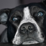 Razze di cani pericolose? No. Dipende dall'educazione! [Guarda il video]