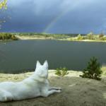 Cimitero per animali domestici: quando il pet vola sul Ponte dell'Arcobaleno [intervista]