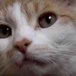 Perché il gatto preferisce bere dal rubinetto?