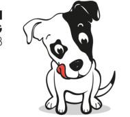 mini-dog
