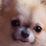 Nomi per cani: scegliere il nome più originale per un cucciolo