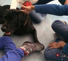 pet-therapy-cane