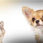 Concorsi e premi per cani e gatti: tutte le novità di luglio!