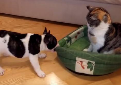 cane-gatto-cuccia