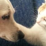 Cane e gatto nemici? O solo diversi?