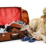 Vacanze con il tuo pet in hotel, partecipa e vinci subito