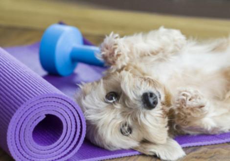 doga-cane-yoga