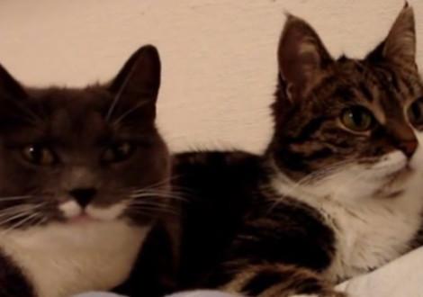 gatti linguaggio