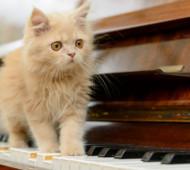 gatto-musica