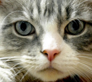 gatto-nome