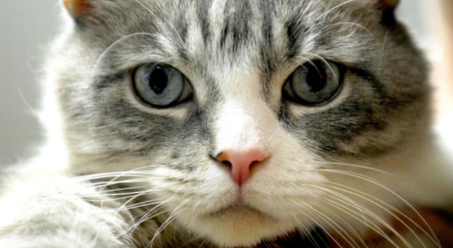 abbastanza Come prepararsi quando un gattino entra per la prima volta nella  FM18