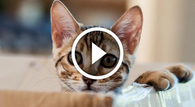 Favorito Video divertente di gatti e cani che amano infilarsi in spazi  TX44