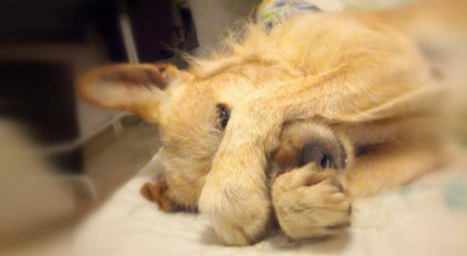 I cani sognano quando dormono? [ricerca]