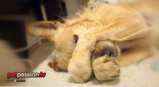 I cani sognano quando dormono?