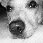 Perché il cane sospira?