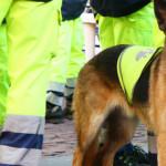 Terremoto a Rieti: cani fondamentali per i soccorsi