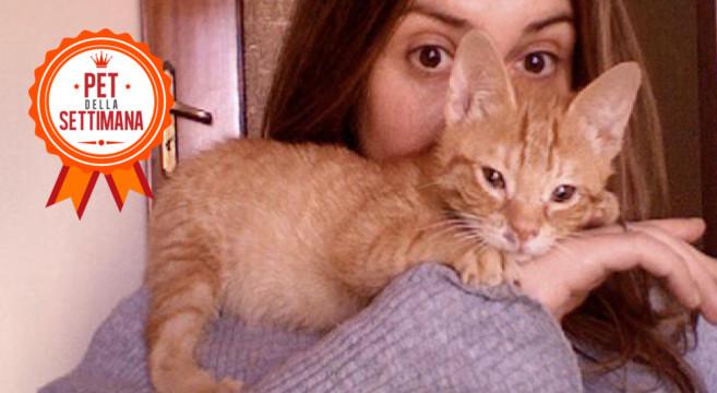 Il gatto rosso padrone di casa