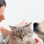 Scopri i concorsi e le iniziative di settembre per cane e gatto!