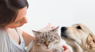 Premi per cane e gatto