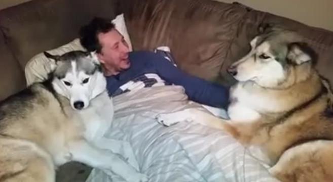 Cane geloso che chiede le coccole [video]