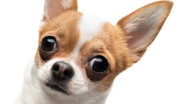 Risultati immagini per cane