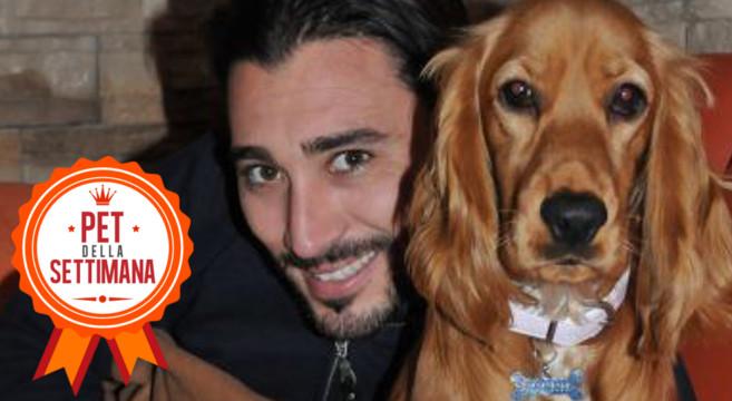 Cocker Spaniel: storia di Sharon, il cane dallo sguardo irresistibile
