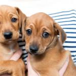 Cani e gatti in difficoltà: il ruolo di associazioni e volontari