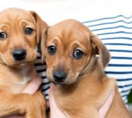 cuccioli-associazione