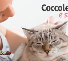 gatto-coccole