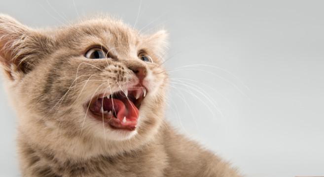 """I gatti ci corrompono? E' una questione di """"miao""""!"""