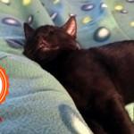 Storie di due gatti fortunati che hanno trovato una famiglia dopo l'abbandono