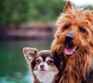 Video divertente cani