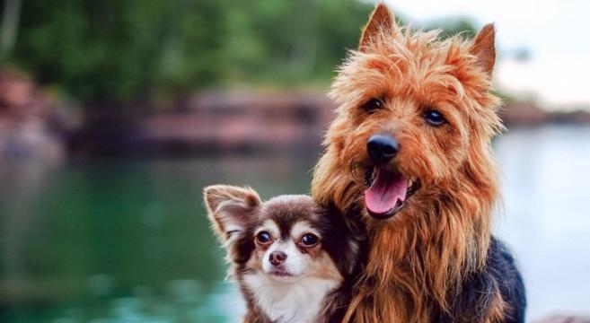Video divertente del cane che fa la spia