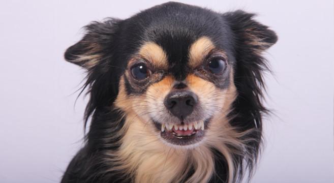 Segnali di aggressività del cane