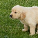 Bisogni dei cani: evita le multe!