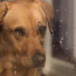 Cani e pioggia: porta fuori il cane anche quando piove!