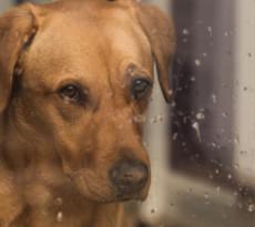 cane e pioggia