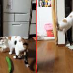 Gatti e cetrioli: ecco perché i gatti hanno paura dei cetrioli