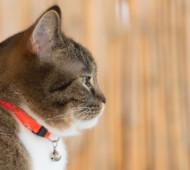 gatto collare campanello