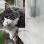 Sicurezza gatto: come mettere in sicurezza balconi, finestre e terrazzi