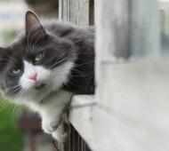 Gatto affacciato alla finestra