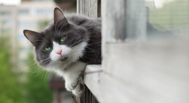 Petpassion foto video animali gatti cani cuccioli for Finestra gatto